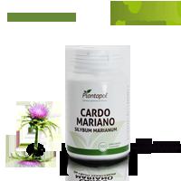 Cardo Mariano_100m mini plantapoll